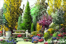 Garden design:Dream Garden