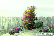 Garden design:back yard
