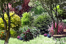Garden design:in the shade of trees...