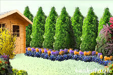 Garden design:Violet/Green/Yellow/Blue