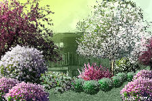 Garden design:Spring Bloom