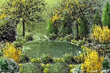Garden design:Spring yellows