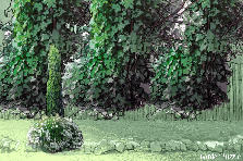 Garden design:il muro delle rose