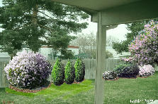 Garden design:backyard fence - 3