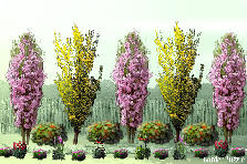 Garden design:colors match
