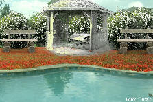 Garden design:by the pool