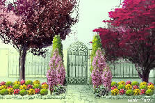 Garden design:pretty 1