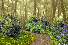 Garden design:Woods are lovely dark and deep
