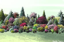 Garden design:multicolor