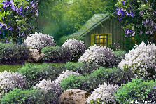 Garden design:Peek a Boo Hideaway