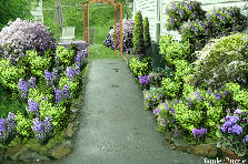 Garden design:jardin morado modificado