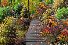 Garden design:I love Autumn! - My version