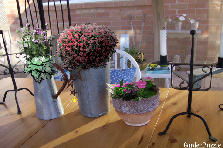 Garden design:Garden Tin Containers