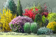 Garden design:bright shrubs