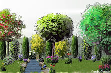 Garden design:My simply garden...