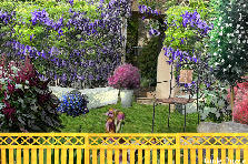 Garden design:The Wisteria House
