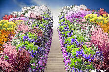 Garden design:Heavenly Stairway for my Father