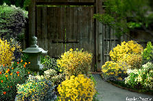 Garden design:yellow