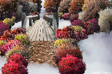 Garden design:Into the Myst