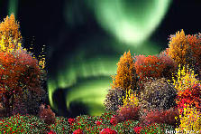 Garden design:Into the Aurora