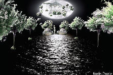 Garden design:Moon Lit Night
