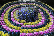 Garden design:Whirl of flowers
