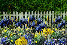 Garden design:Picket fence