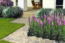 Garden design:Entre