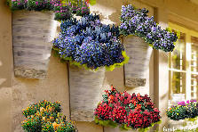 Garden design:hanging flower baskets