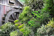 Garden design:Ancient windmill