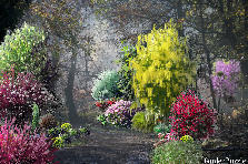 Garden design:Spotlight