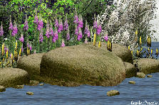 Garden design:Fox Shoreline
