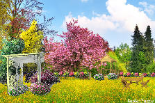 Garden design:Pink tree