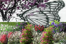 Garden design:Butterfly under the magnolia tree