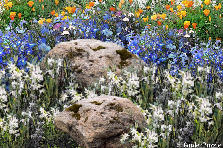 Garden design:Field Rocks