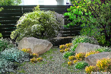 Garden design:patch of green ....