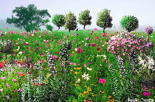 Garden design:field of flowers
