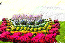 Garden design:Backwards Rainbow Garden