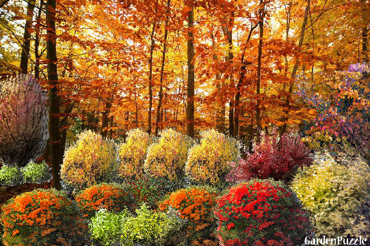 Garden design:Changing leaves - Autumn