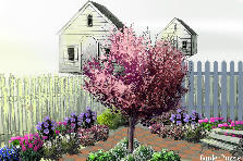 Garden design:Backyard Corner