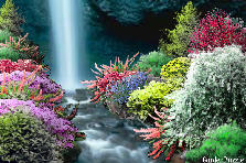 Garden design:Waterfall