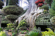 Garden design:Giant Flowing Roots