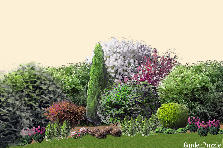 Garden design:10