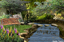 Garden design:Water Garden (my version)