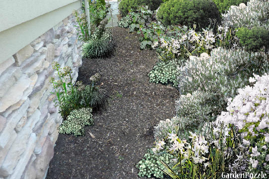 Garden design:north walkway (my version) - Spring
