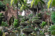 Garden design:Mysterious Desert Swamp