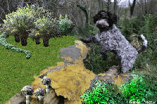 Garden design:Be wary Cat! Sharp dog!
