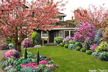 Garden design:Cherry blossoms