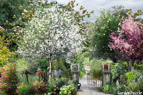 Garden design:Let him enter in who likes to garden - Spring