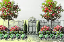 Garden design:English Hawthorn & Periwinkle